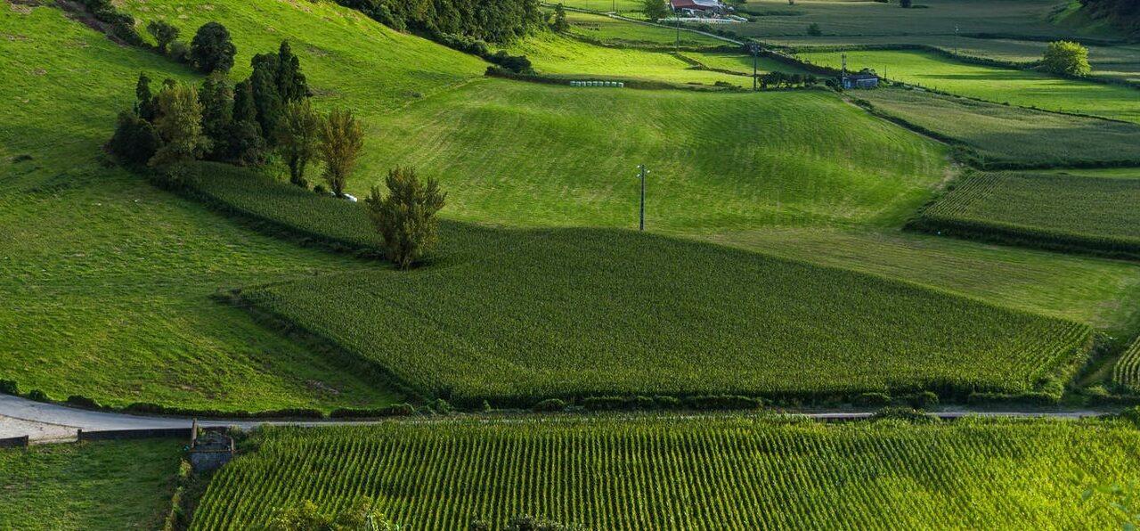 Несогласование границ земельного участка со смежными землевладельцами.
