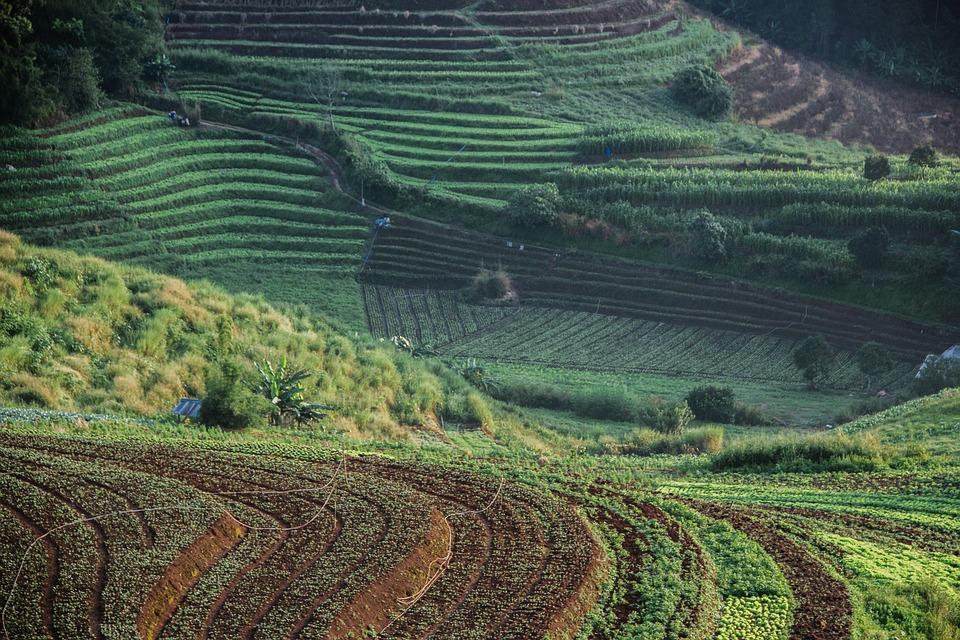 Защита преимущественного права на продление договора аренды земли.