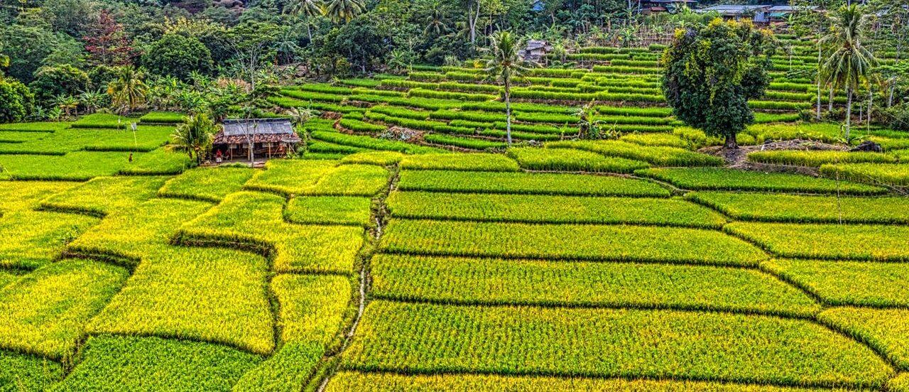 Земли фермерского хозяйства и их наследование: возможно или нет?